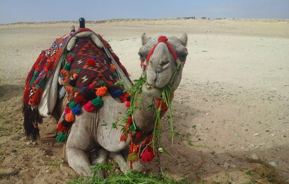 Тур в Египет и путешествие возле пирамид на верблюде