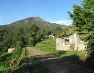 Photo of Timor oriental
