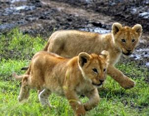 Photo of Kenia