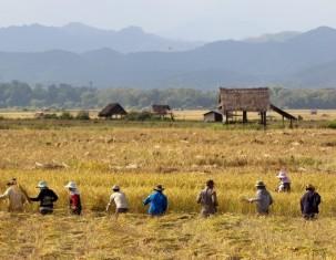 Photo of Ban Louangnamtha