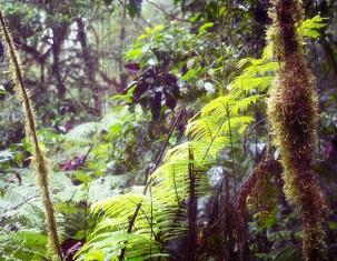 Photo of Santa Elena
