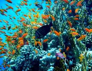 Photo of Sharm el-Sheikh
