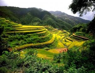 Photo of Cina