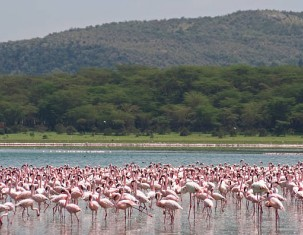 Photo of Naivasha