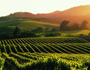 Photo of Napa