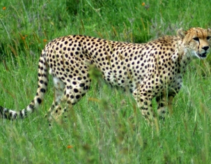 Photo of Serengeti District