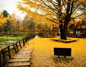 Photo of Yongin