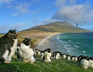 Photo of Falkland Islands