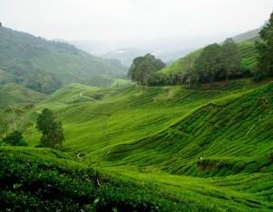 Photo of Tanah Rata