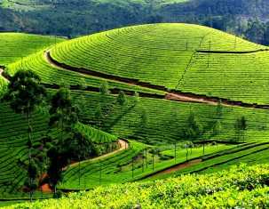Photo of Munnar