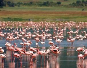 Photo of Ngorongoro
