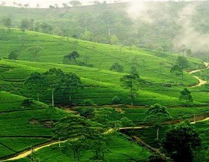 Photo of Bandarawela