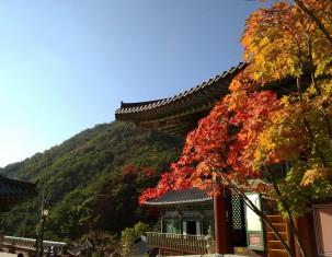 Photo of Daegu