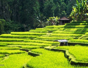 Photo of Ubud