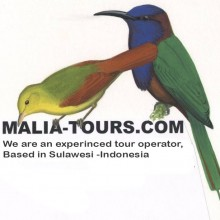 Malia Tours