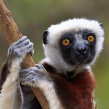 Nosy Madagasikara