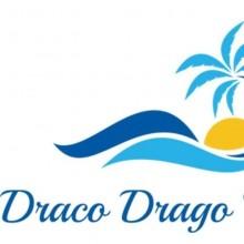 Draco Drago TENERIFE