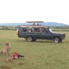 ALL SCENERY BUDGET SAFARIS